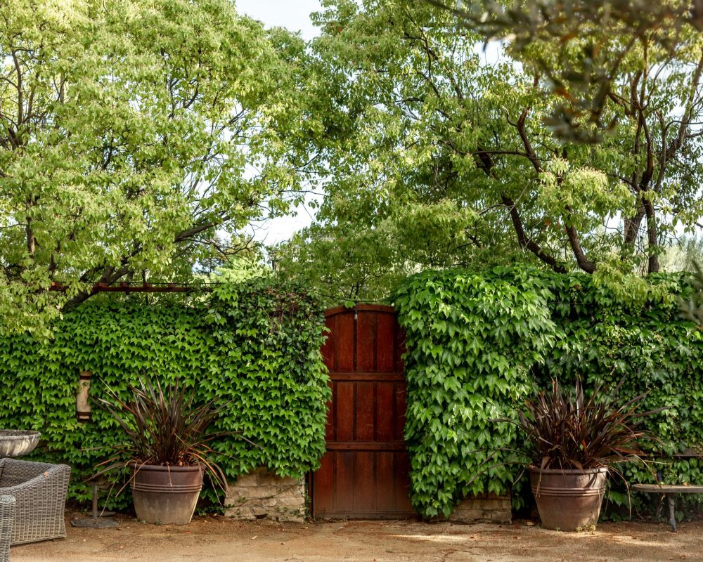 Outside gate surrounded by vine covered wall